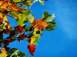Fall Events & Activities in NC